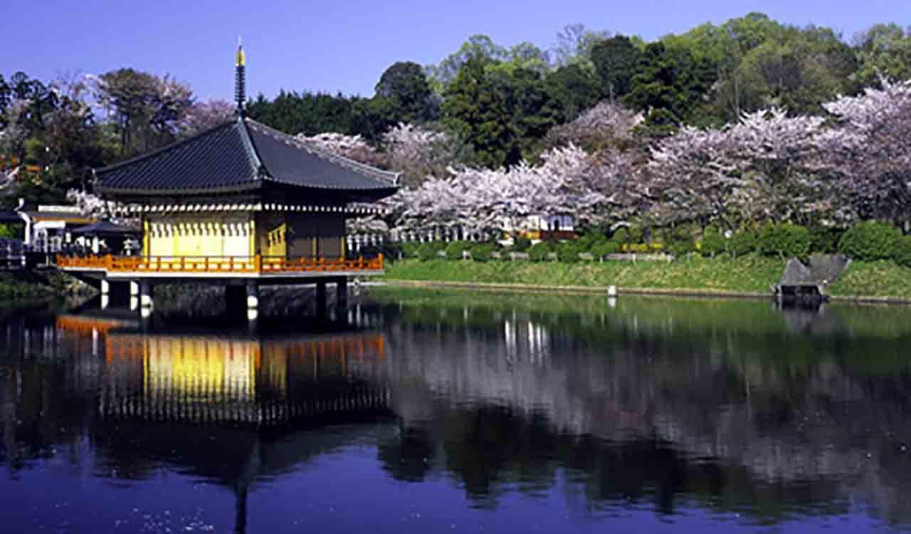 安倍文殊院の春の桜の景色
