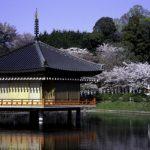 日本の春の桜咲く奈良の安部文殊院