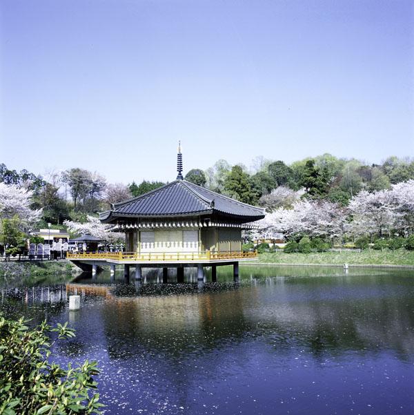 桜満開の奈良の安倍文殊院の春