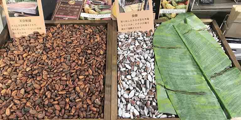 カカオ豆の発酵風景