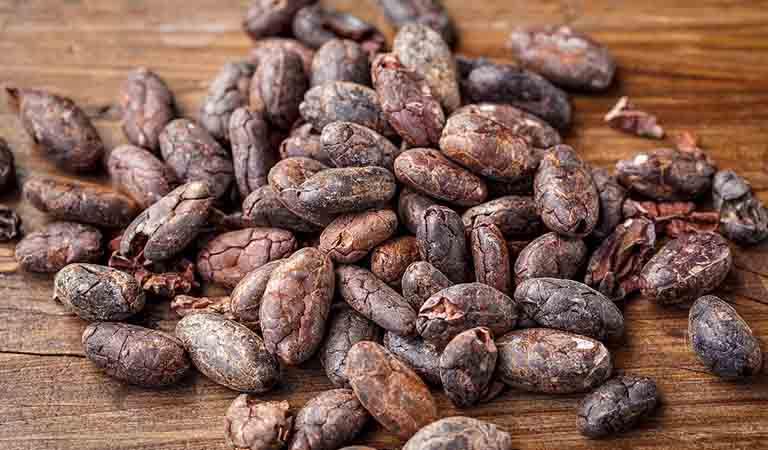 クリオロ種のカカオ豆