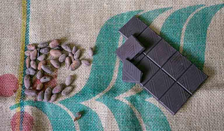 カカオ豆の派生種のイメージ